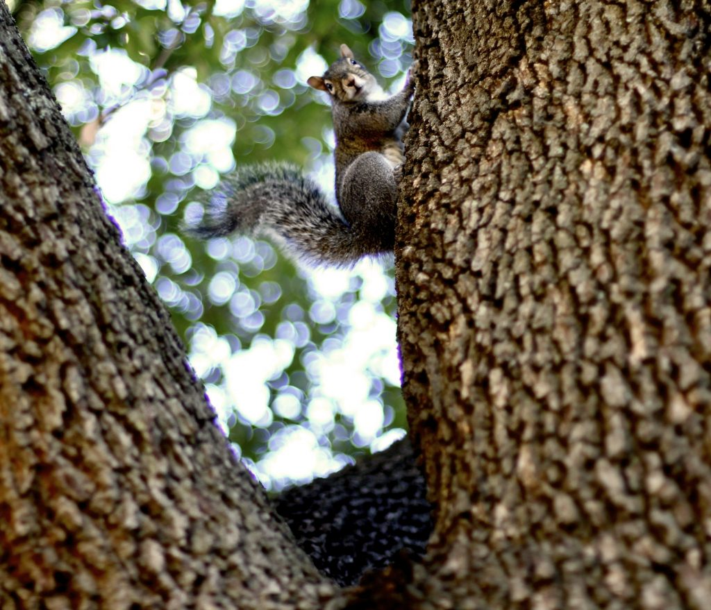 a squirrel in a tree on the UA Quad